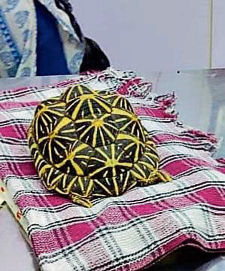 Pregnant star tortoise rescued in Mumbai; diagnosed with bone disease