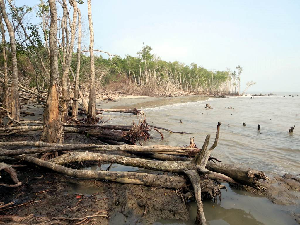 When the Sea Rises: A Story from the Indian Sundarbans - The Wire Science
