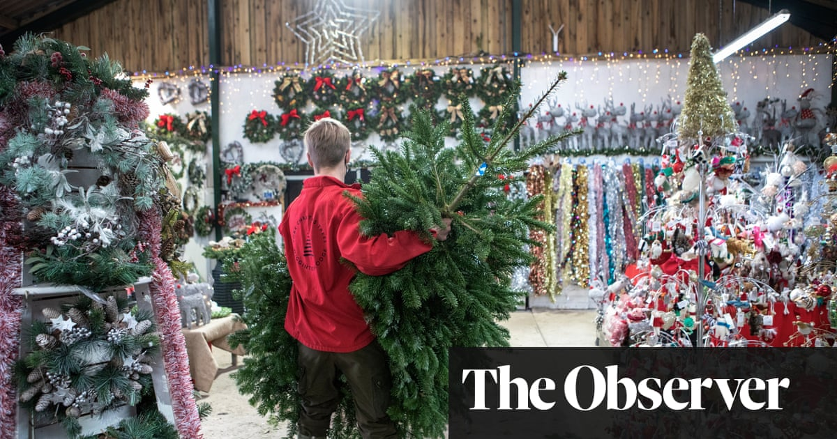 Christmas comes early as UK farms sell out of trees