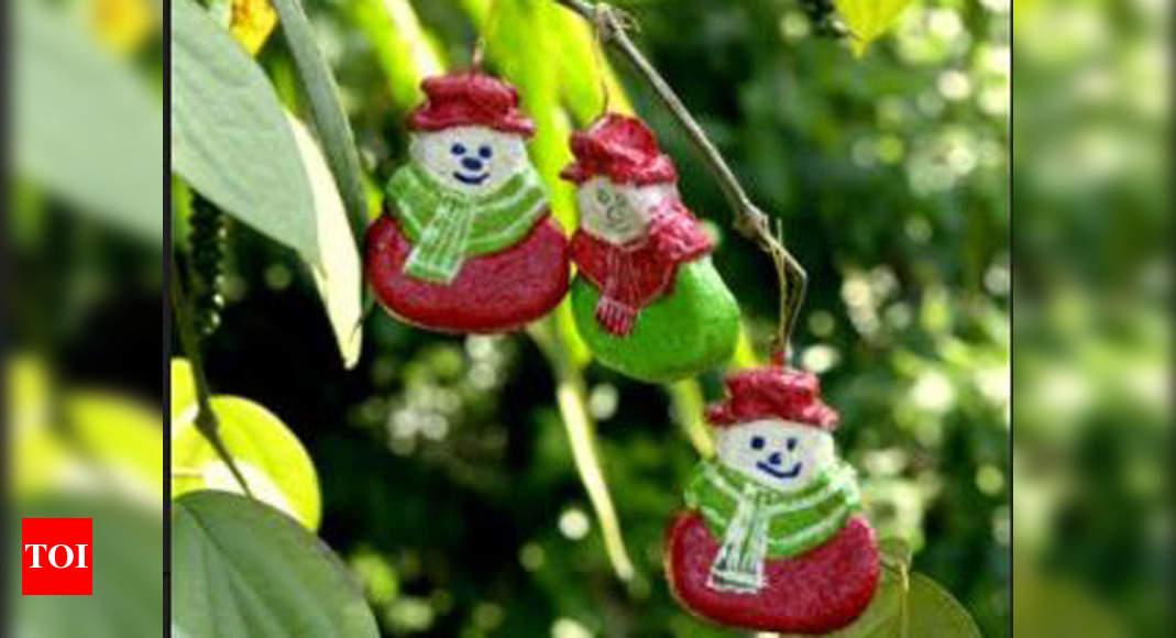 Karnataka: Christmas celebrations go green in Mangaluru | Mangaluru News - Times of India